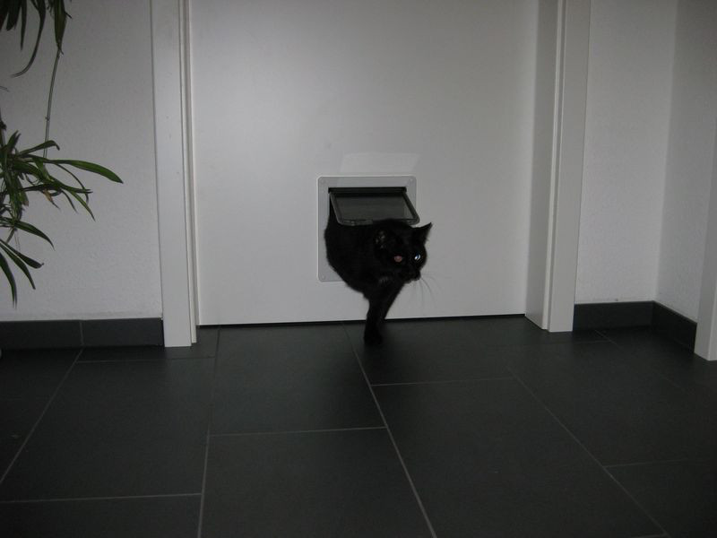 einbau katzenklappe wir bauen dann mal ein haus. Black Bedroom Furniture Sets. Home Design Ideas