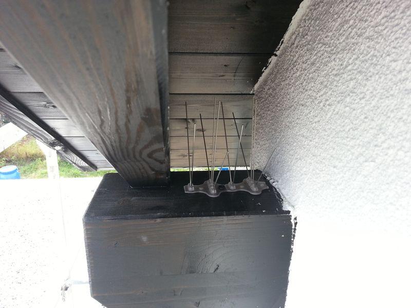 vogelabwehr installiert wir bauen dann mal ein haus. Black Bedroom Furniture Sets. Home Design Ideas