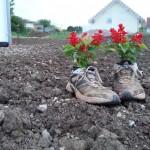 Schuhe als Pflanzkübel